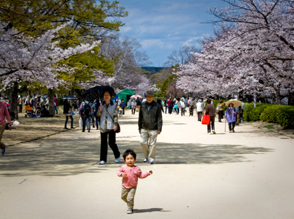 Sakura in Osaka Castle Park