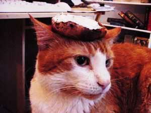 Cat with bagel on its head