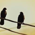 Japanese Idiom: Kill two birds with one Stone