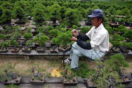 Man with bonsai tree