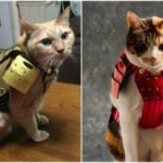 Samurai Armor or your Pets
